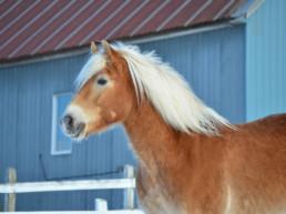 Marie-Philip Couillard - Dressage classique, cours d'équitation, entraînement de chevaux